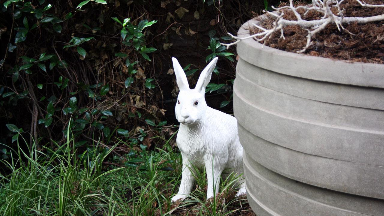 Lapin dans le patio...