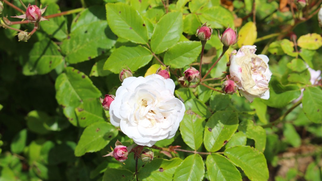 Jardin de la Roche Jagu