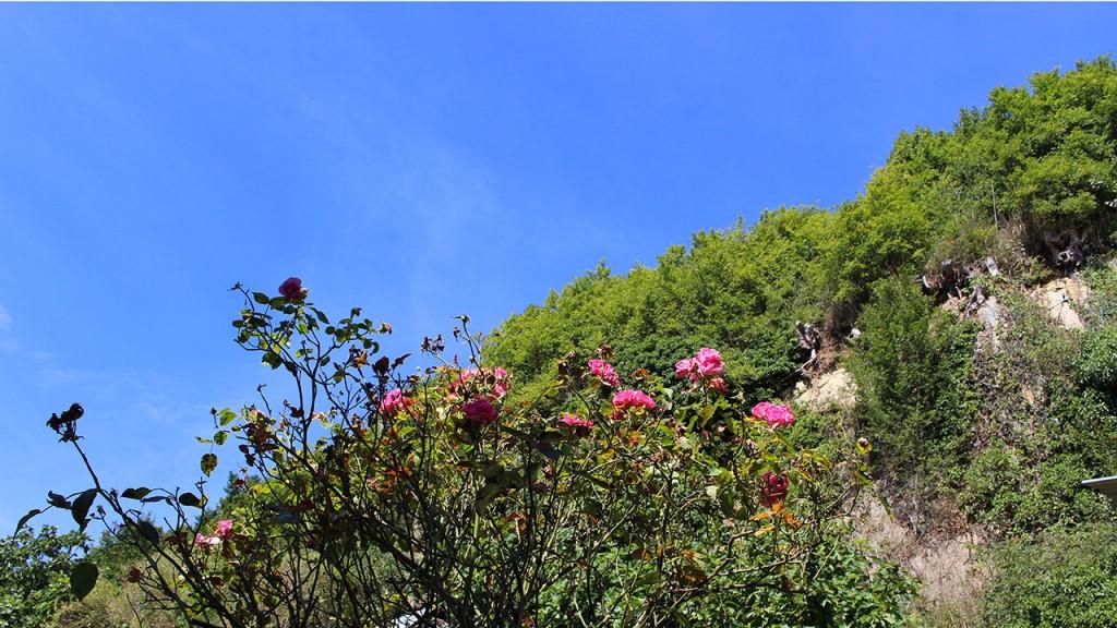 Jardin fleuri Cancale