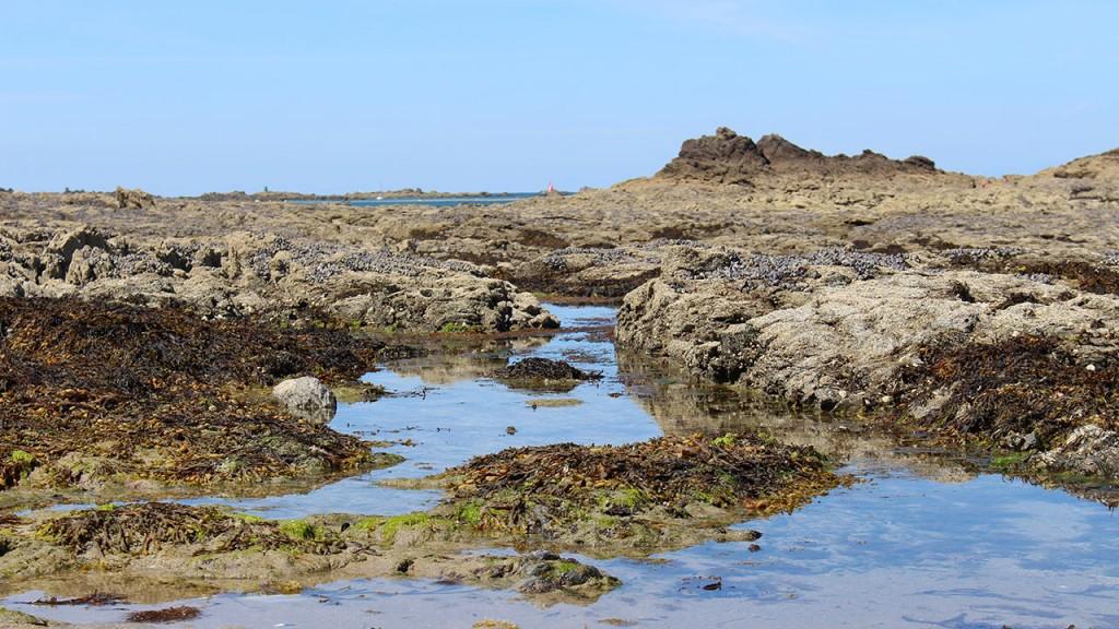 Marée basse Dinard