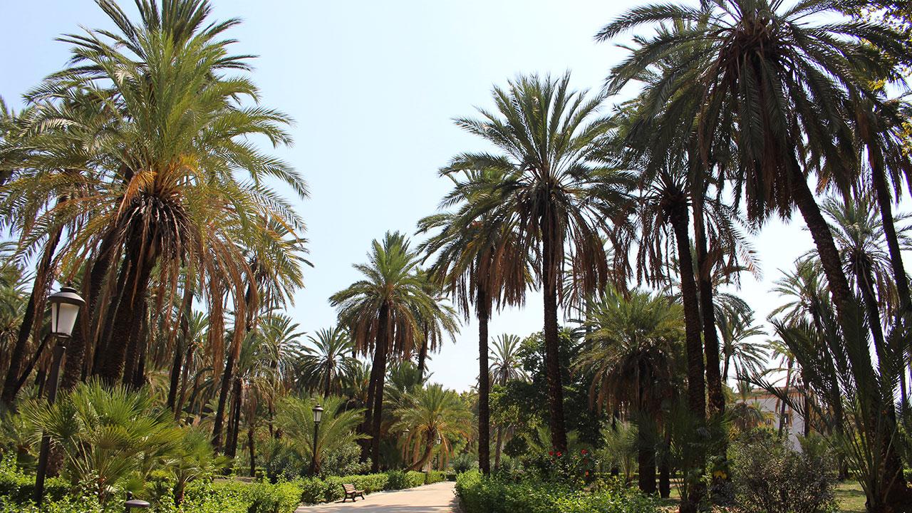 Des palmiers en Sicile