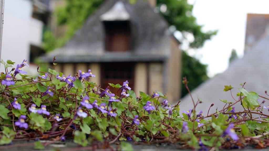 ville fleurie chateaubriant