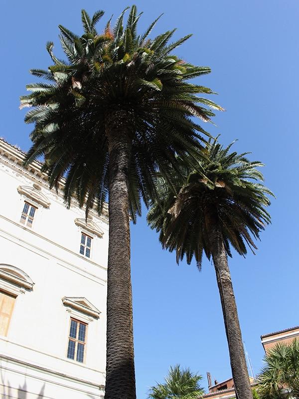 palmiers rome